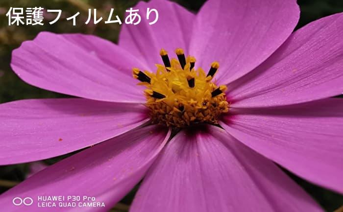 Alinsea P30 Pro カメラ保護フィルムあり 撮影画像(コスモス)